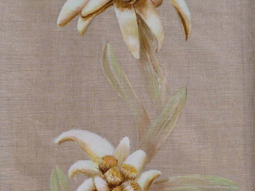 Edelweiss-2
