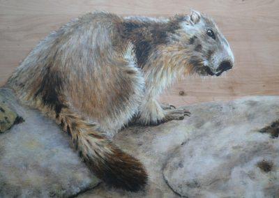 Marmotte sur rocher