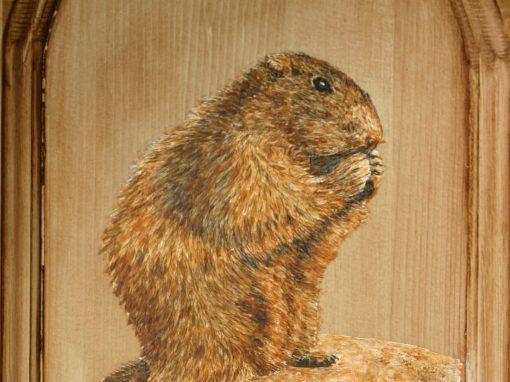 Marmotte au repas