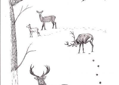 Cerfs dans la neige