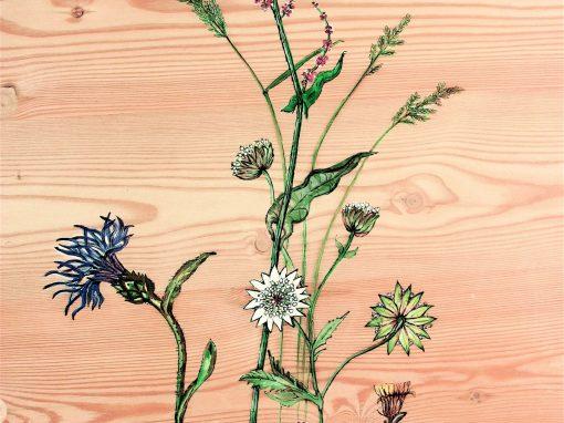Bleuet et fleurs des Alpes