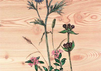 Panicaut et fleurs des Alpes